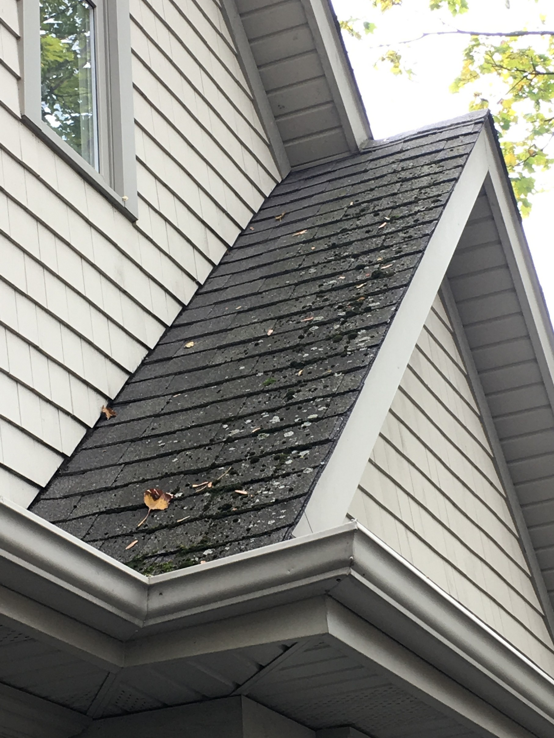 York Roof Cleaning